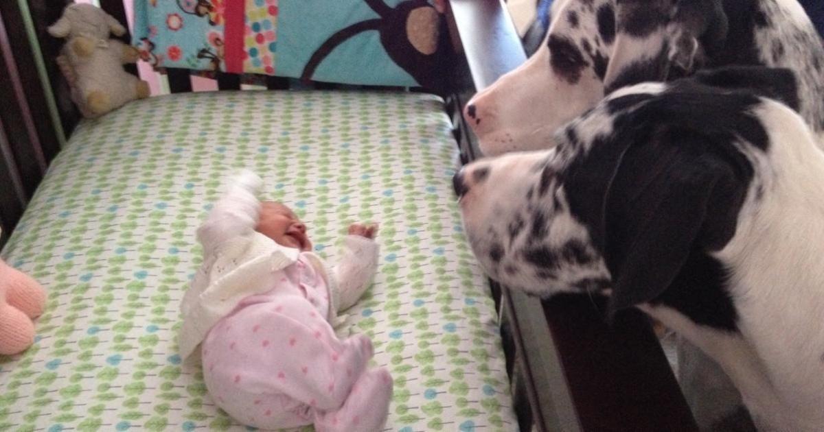 Ils laissent leur bébé seul avec le chien, lorsqu'ils reviennent dans la pièce, ils figent d'admiration en regardant ce moment!