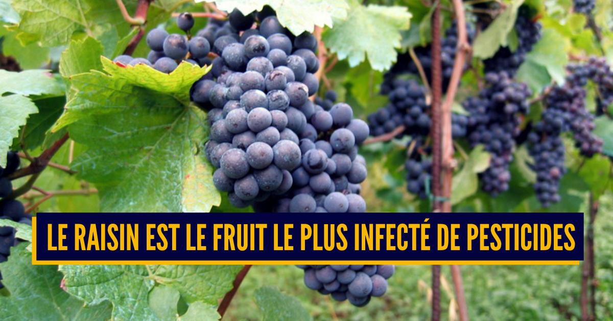 Top 10 des fruits et légumes où y'a le plus de pesticides, ceux qui te font du mal