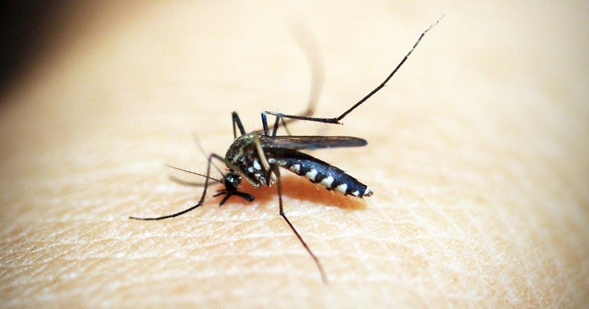 Alerte au moustique tigre dans 42 départements