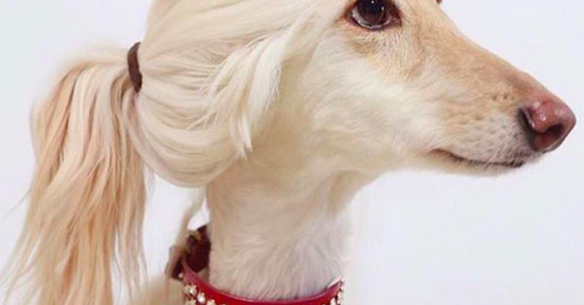 16 situations très connues des propriétaires de chiens