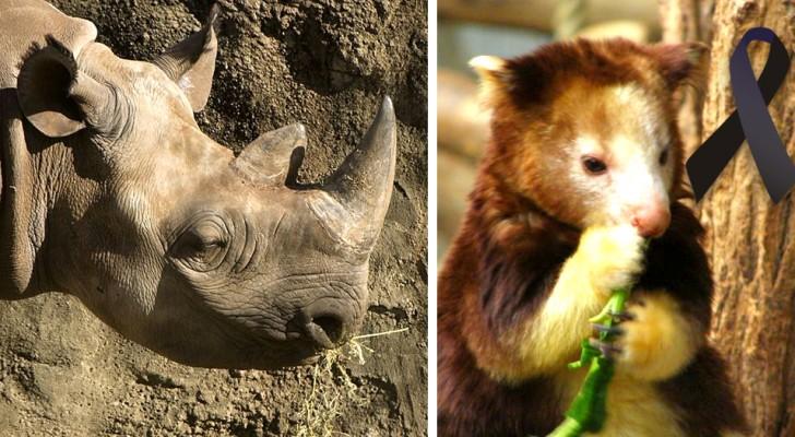 Extinction incontrôlée : toutes les espèces auxquelles nous avons dit adieu de 2000 à ce jour