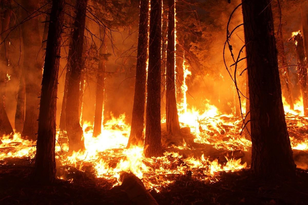 Une armée de drones pour reboiser les forêts décimées par les incendies ?