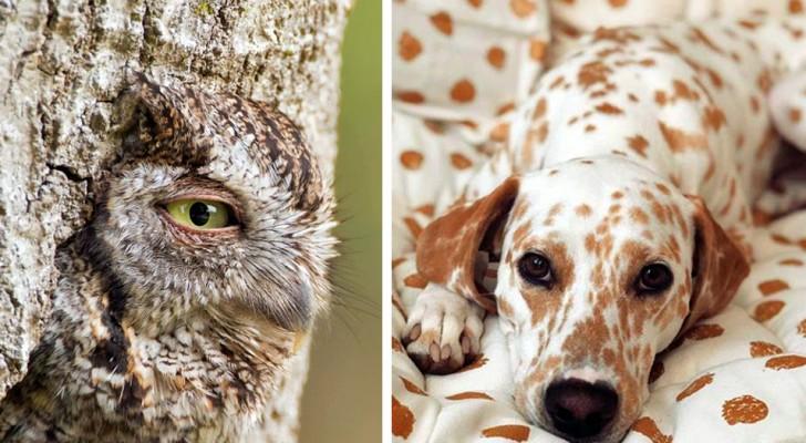 24 images d'animaux camouflés que vous remarquerez à peine