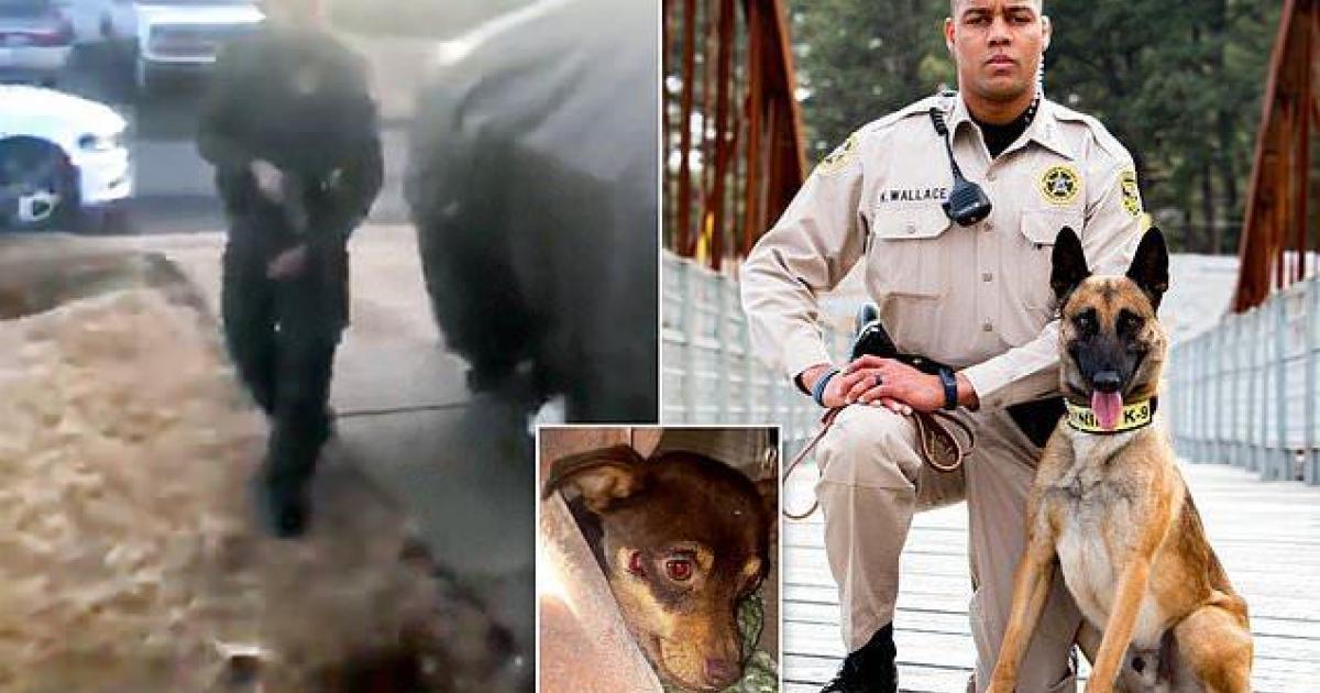 Un policier congédié après avoir tué un chihuahua d'une balle en pleine tête.