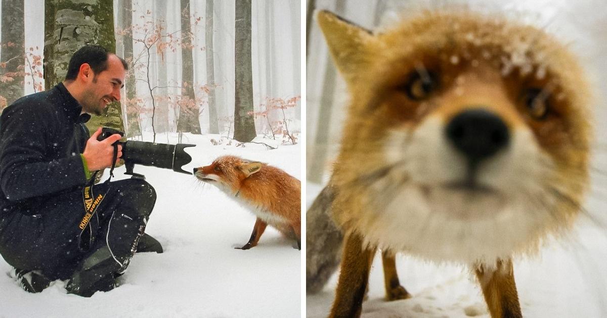 17Moments magiques oùles photographes animaliers ont fait unpas deplus versLA photo parfaite