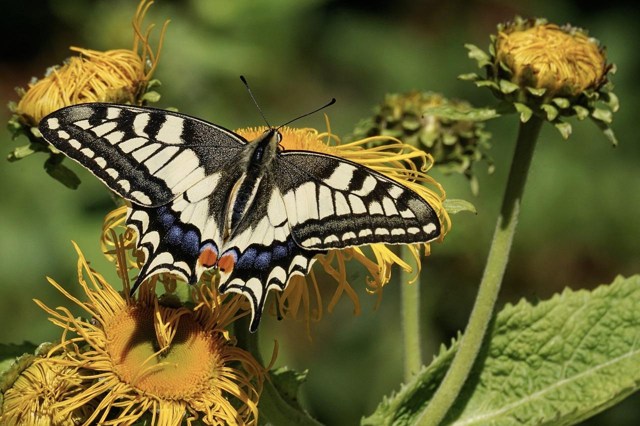 Les insectes pourraient disparaître dans quelques décennies – SciencePost