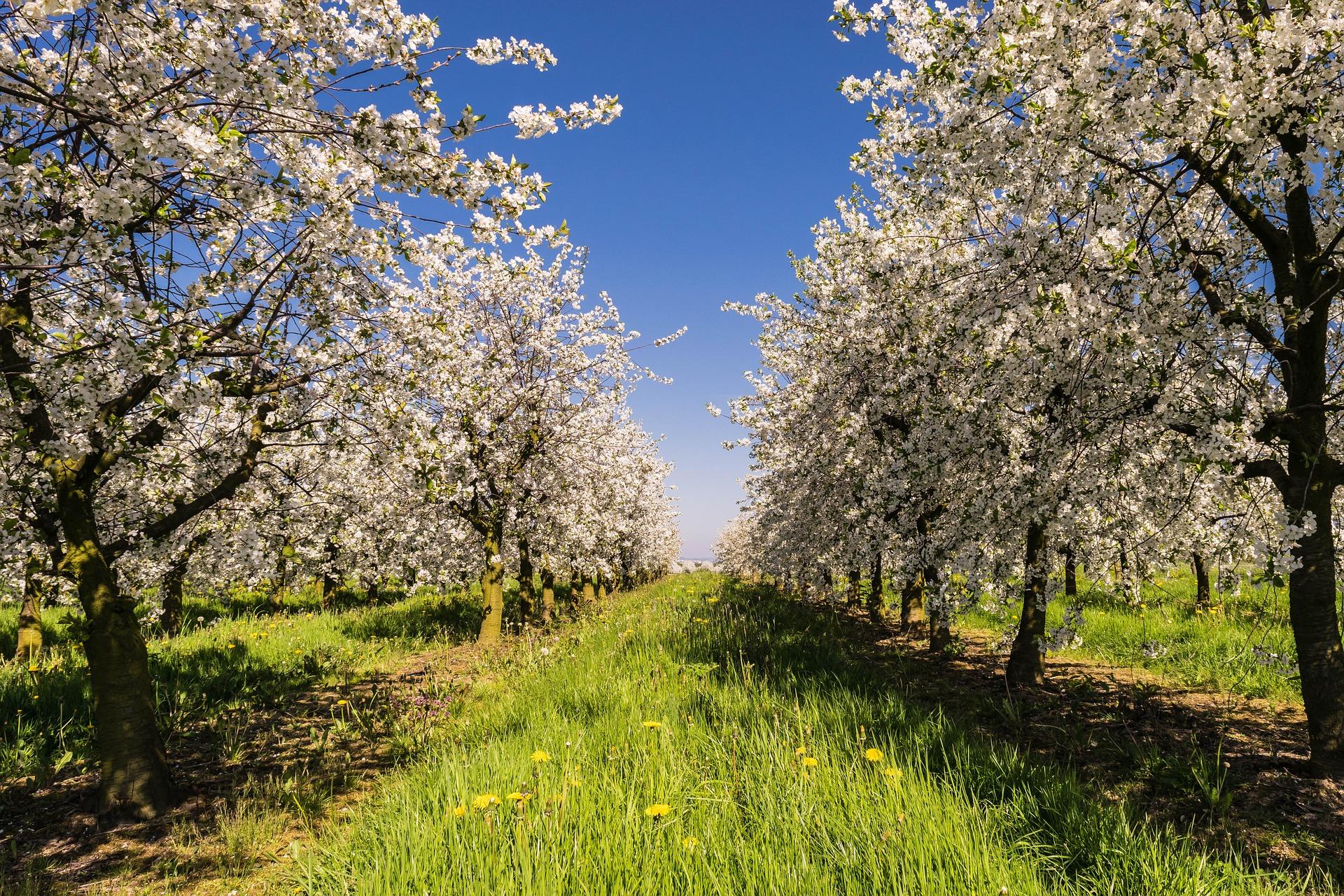 6 façons de planter un arbre en un clic – SciencePost