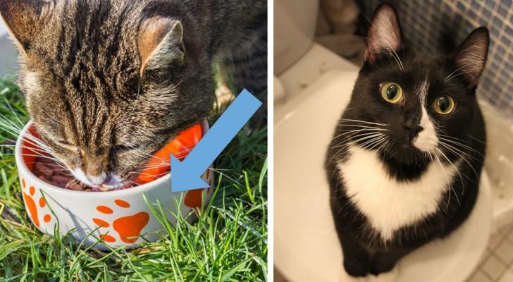 Les 14 erreurs que les maîtres de chats font le plus souvent avec leurs amis félins