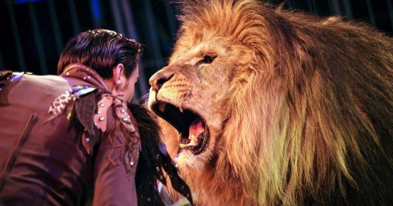 Au Royaume-Uni, les animaux sauvages devraient bientôt être interdits dans les cirques