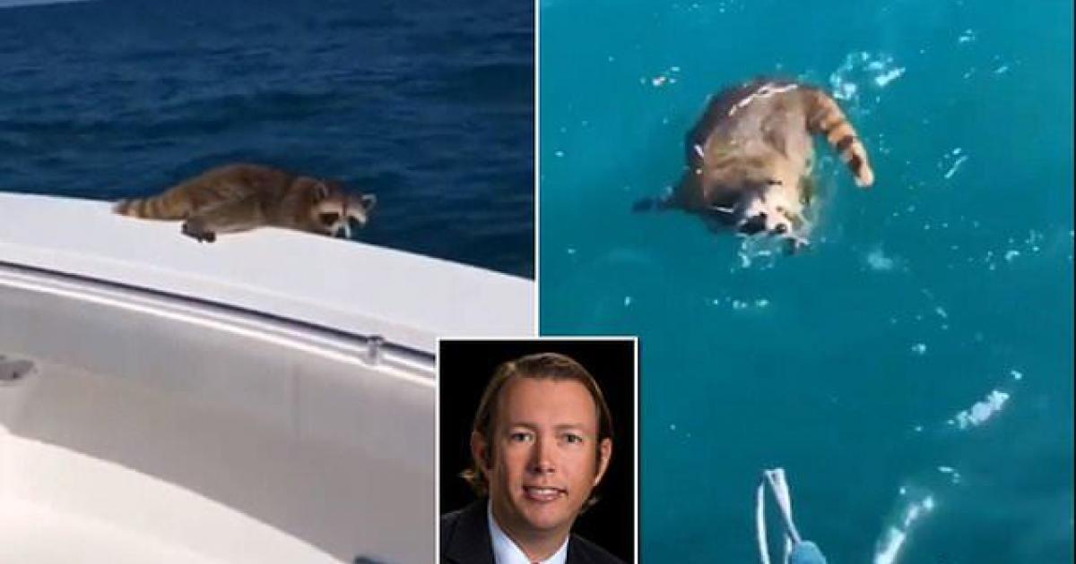 Il découvre un raton-laveur sur son bateau et l'oblige à se noyer à 30 km de la rive.