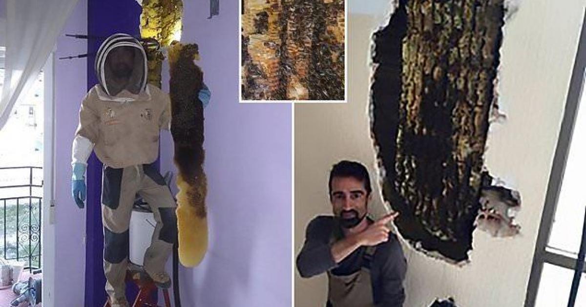 Un couple qui entendait un bruit dans les murs de leur maison découvre 80 000 abeilles