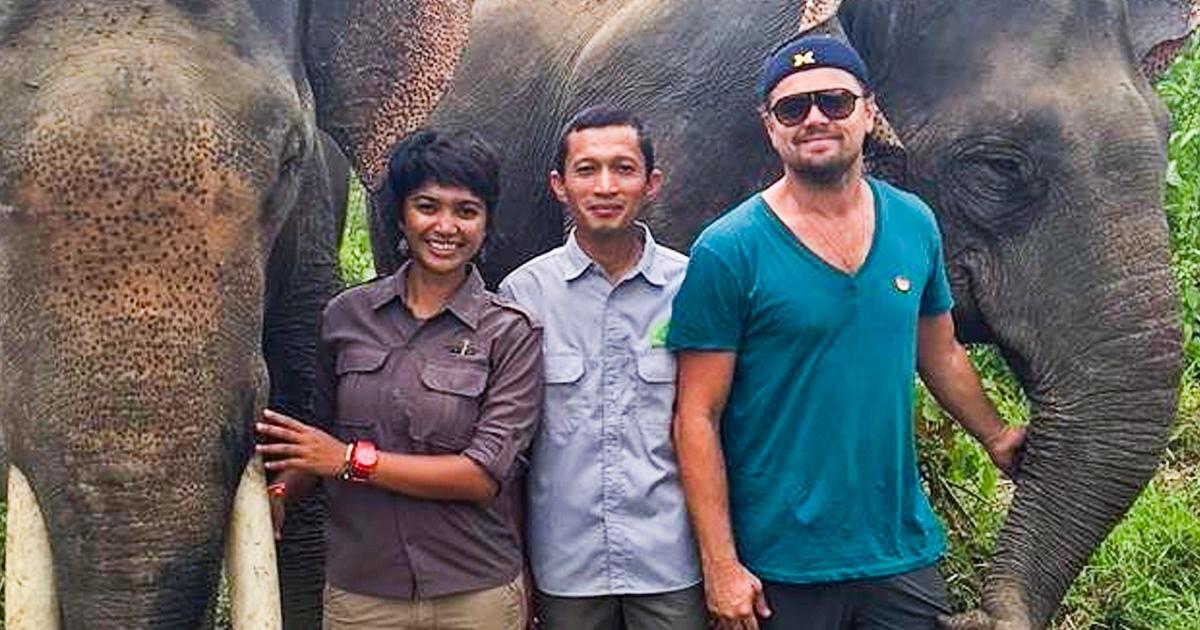 La lutte de Leonardo DiCaprio pour la protection de l'environnement et ce qu'il a accompli jusqu'à présent