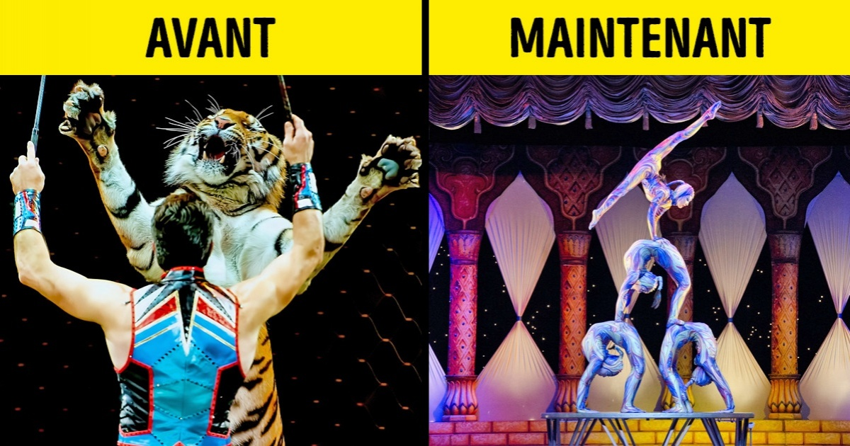 10 Pays qui ont interdit les animaux dans les cirques, prouvant ainsi qu'il est possible de faire des spectacles libres de cruauté