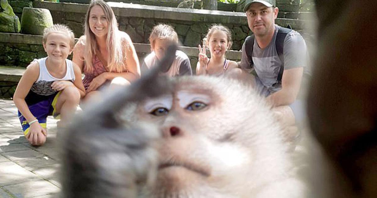 """Un singe """"vole"""" une caméra pour un selfie avec une famille et fait un doigt d'honneur"""