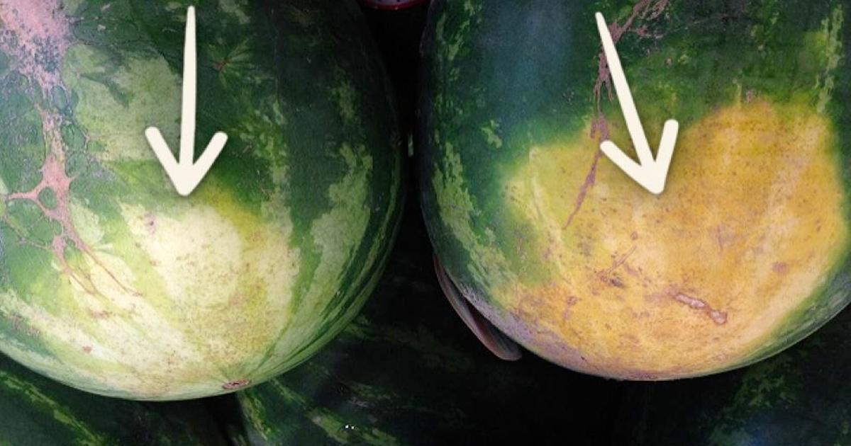 Un fermier expérimenté révèle les 5 choses à regarder pour acheter le melon d'eau parfait.