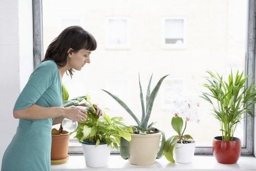 8 plantes qui purifient l'air de votre maison — Améliore ta Santé