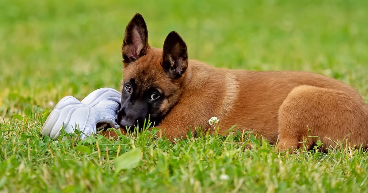 9 chiens enfermés par 40 degrés pendant 10 jours sauvés par les médias sociaux