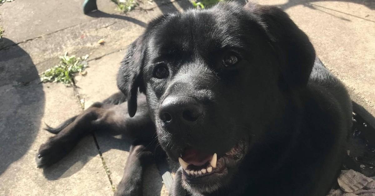 Un chien meurt après avoir mangé une gomme à mâcher qu'il a trouvée dans la rue