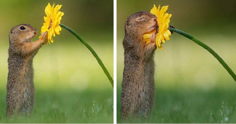Ce photographe prend en photo les animaux dans leur intimité, lorsque personne n'est autour, et le résultat est incroyable !