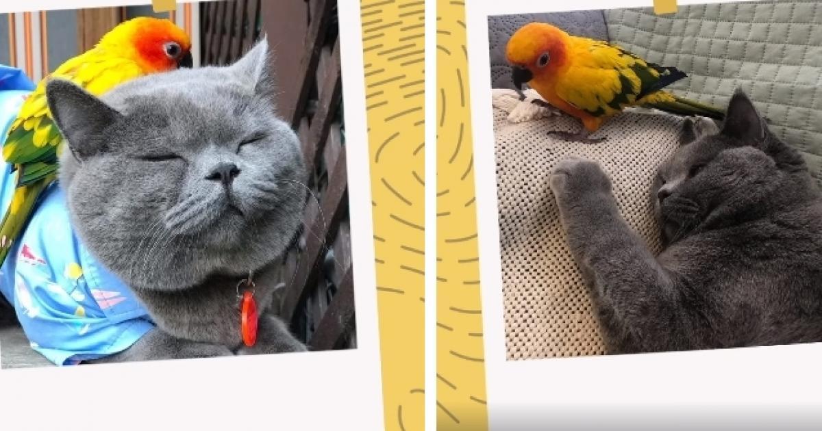 Un duo hors du commun (et trop mignon!) : ce perroquet insiste pour suivre ce chat partout où il va