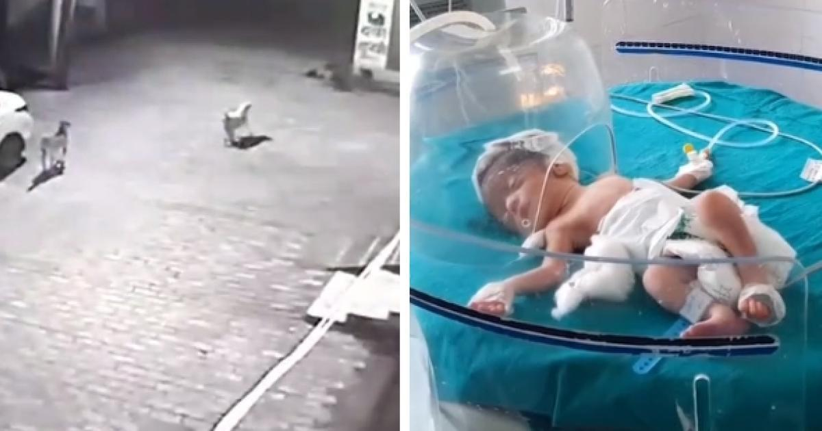Des chiens errants sauvent miraculeusement un nouveau-né lancé dans un égout