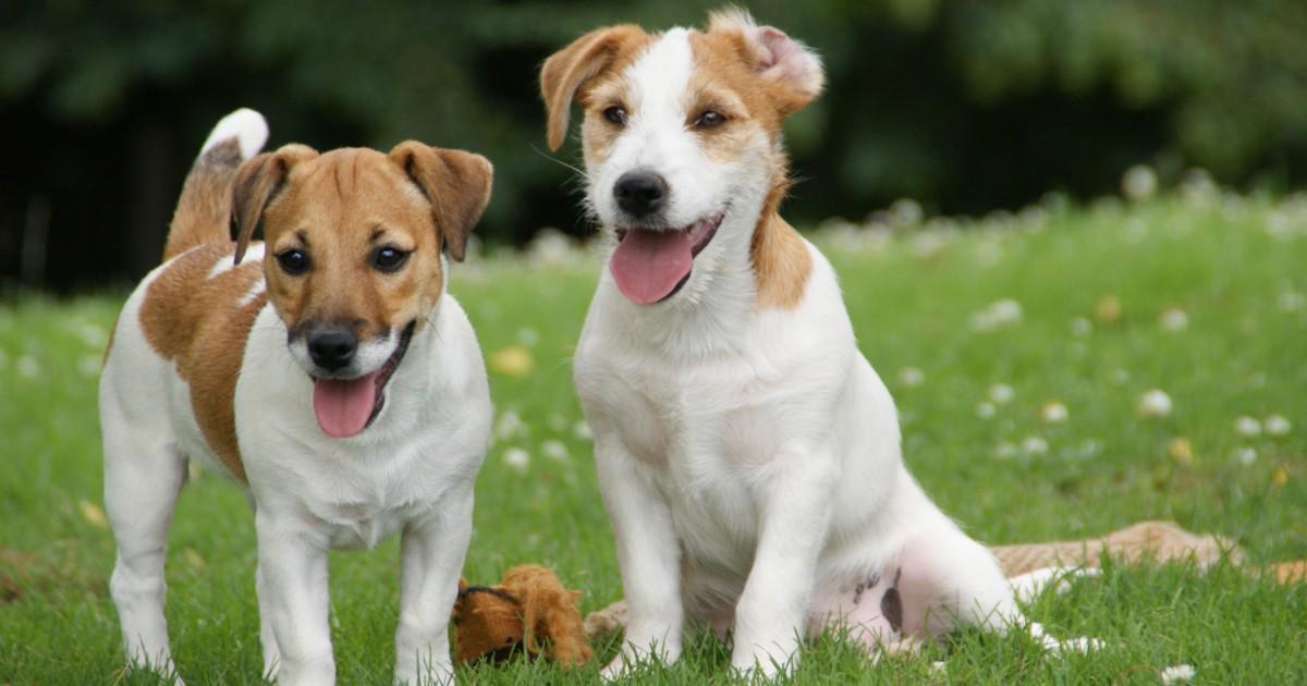 ALERTE Une mystérieuse maladie tue des douzaines de chiens depuis quelques jours