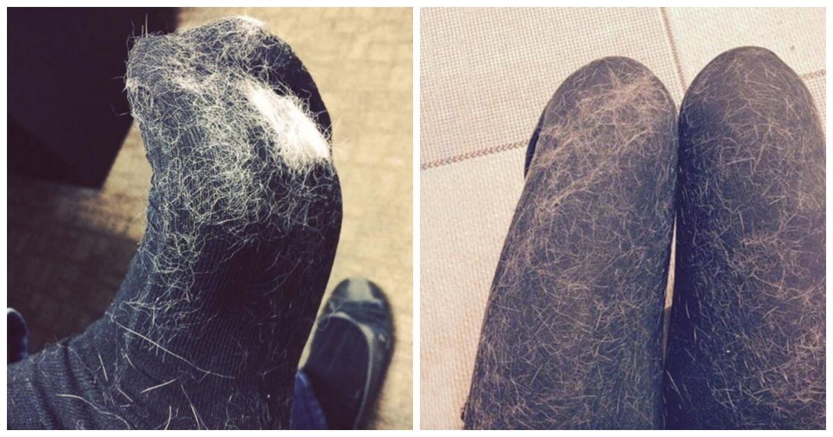 Les poils d'animaux collent sur vos vêtements même après les avoir lavés? Essayez ces trucs astucieux!