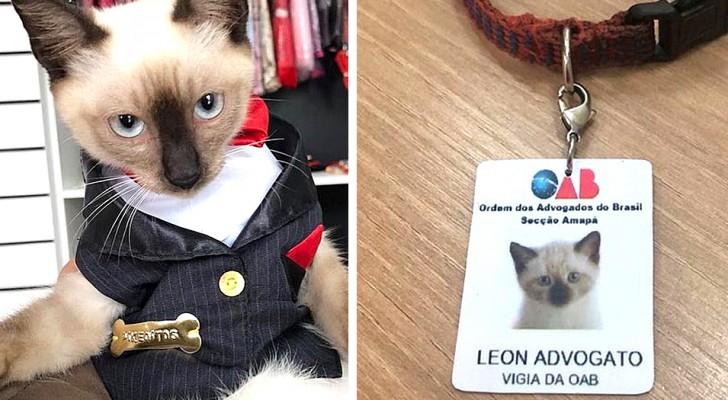 Ce chaton errant cherchait refuge dans un cabinet d'avocats, alors les avocats l'ont 'embauché'