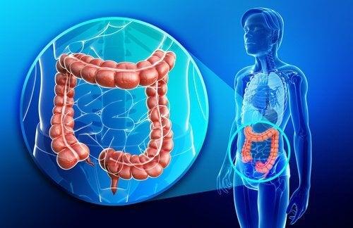 Un smoothie anti-inflammatoire et réparateur pour vos intestins — Améliore ta Santé