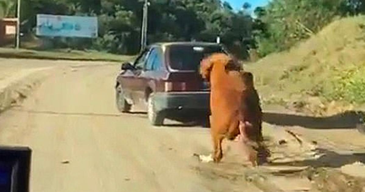 Un pauvre cheval épuisé est tiré sur une route de terre par un conducteur cruel