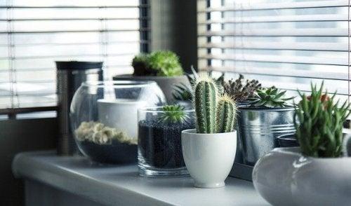 5 idées pour semer vos cactus différemment — Améliore ta Santé