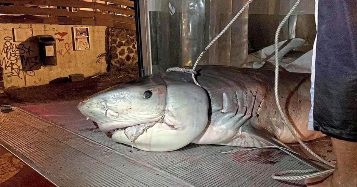 Une main et un avant-bras découverts dans le ventre d'un requin