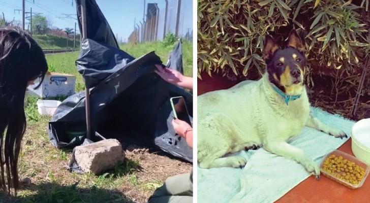 Ce chien s'est installé sur les rails pendant un mois, en attendant le retour de son maître disparu