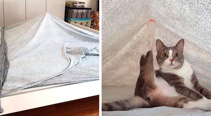 20 photos qui confirment à quel point nos chats domestiques ont un étrange sens de l'humour