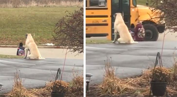 Ce chien s'assoit à côté de sa maîtresse et attend avec elle l'arrivée du bus scolaire