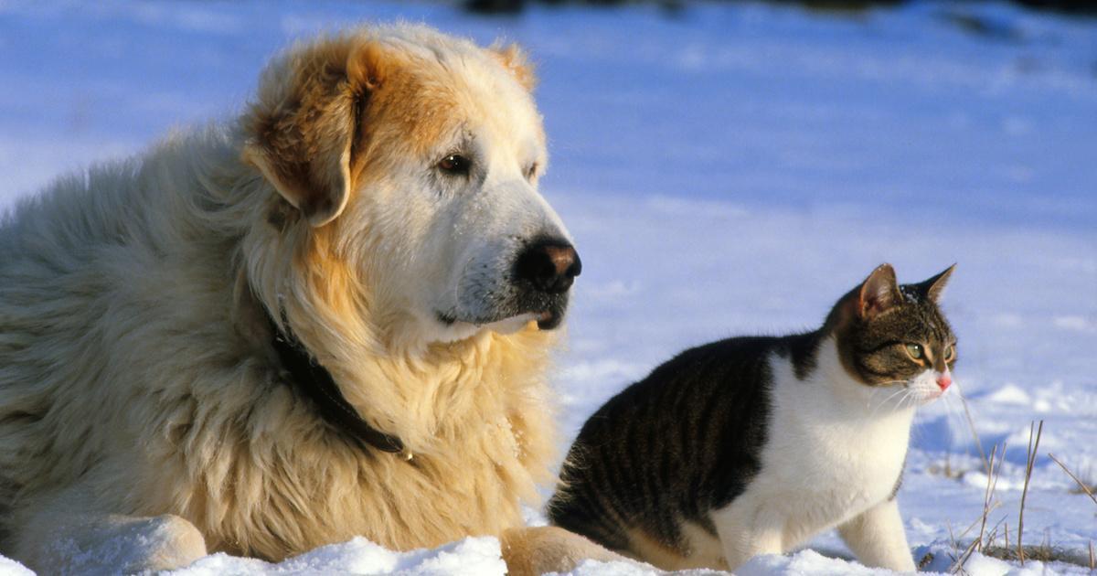 Apprenez à déceler les signes d'hypothermie chez les chats et les chiens