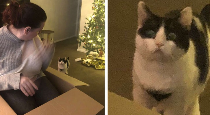 Ce chat s'énerve quand il découvre que le carton n'est pas un cadeau qui lui est destiné