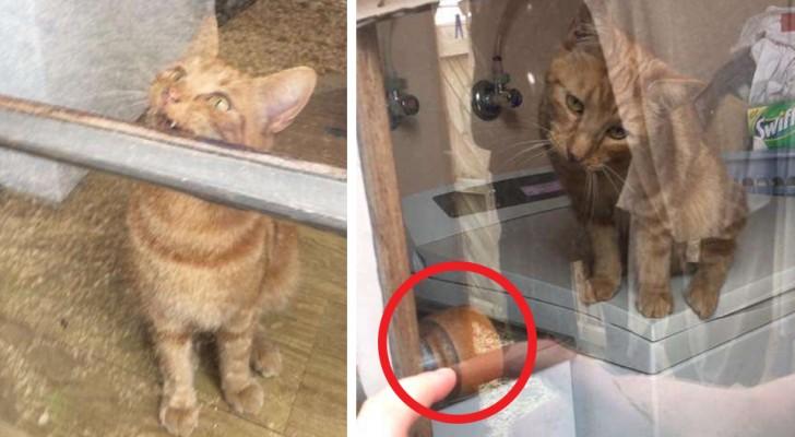 Elle reste enfermée hors de chez elle alors qu'elle fait son ménage mais son chat réussit à lui ouvrir la porte