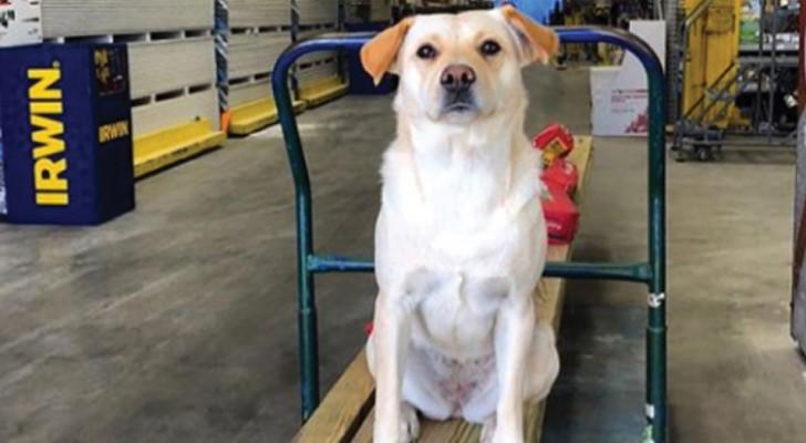 Un voleur dérobe son camion dans un parking : à l'intérieur se trouvait son chien bien-aimé, qu'il ne reverra plus jamais