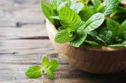 4 recettes délicieuses avec de la menthe — Améliore ta Santé