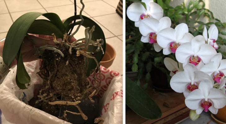 5 facteurs à prendre en compte pour prendre soin de ses orchidées
