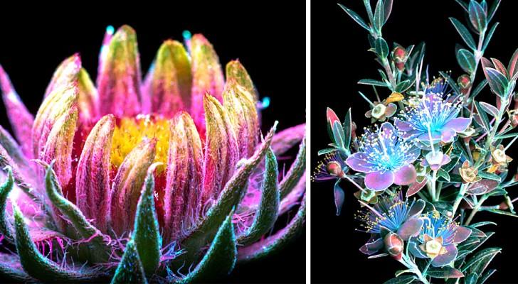 Ce photographe a réussi à capturer la lumière magique et invisible émise par les plantes
