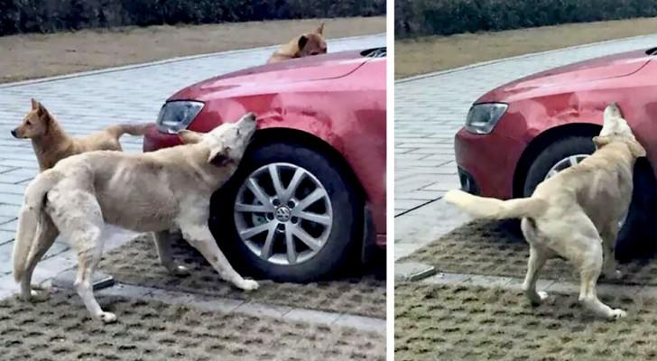 Il chasse méchamment un chien qui dormait sur sa place de parking, mais l'animal 'se venge' en rongeant sa voiture