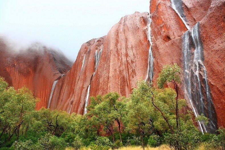 Des archéobotanistes ont découvert les plus ancien aliments végétaux cuisinés en Australie, il y a 65 000 ans