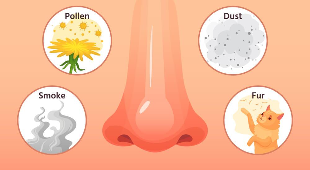 3 remèdes naturels pour vous aider à traiter les allergies: