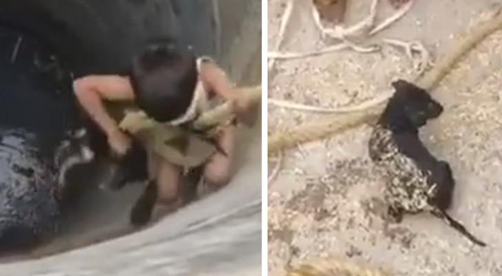 Un brave petit garçon est descendu dans un puits pour sauver un chiot qui risquait de se noyer