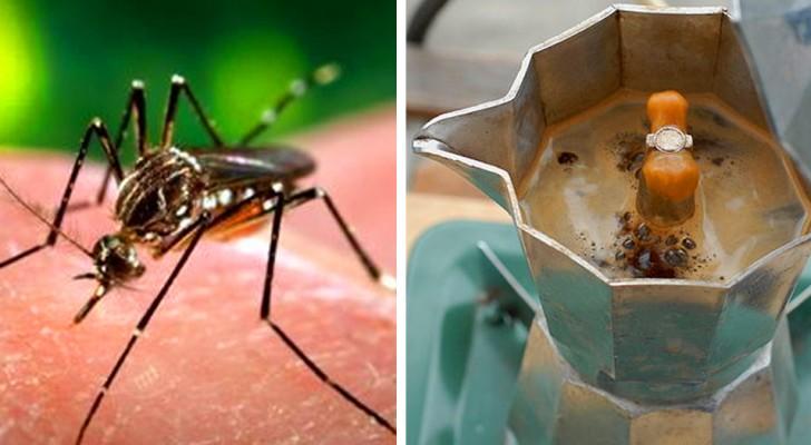Un spray répulsif au café qui éloigne les moustiques : le remède maison, 100% naturel