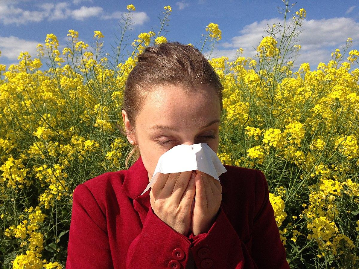 Pourquoi les allergies saisonnières sont-elles en constante augmentation ?