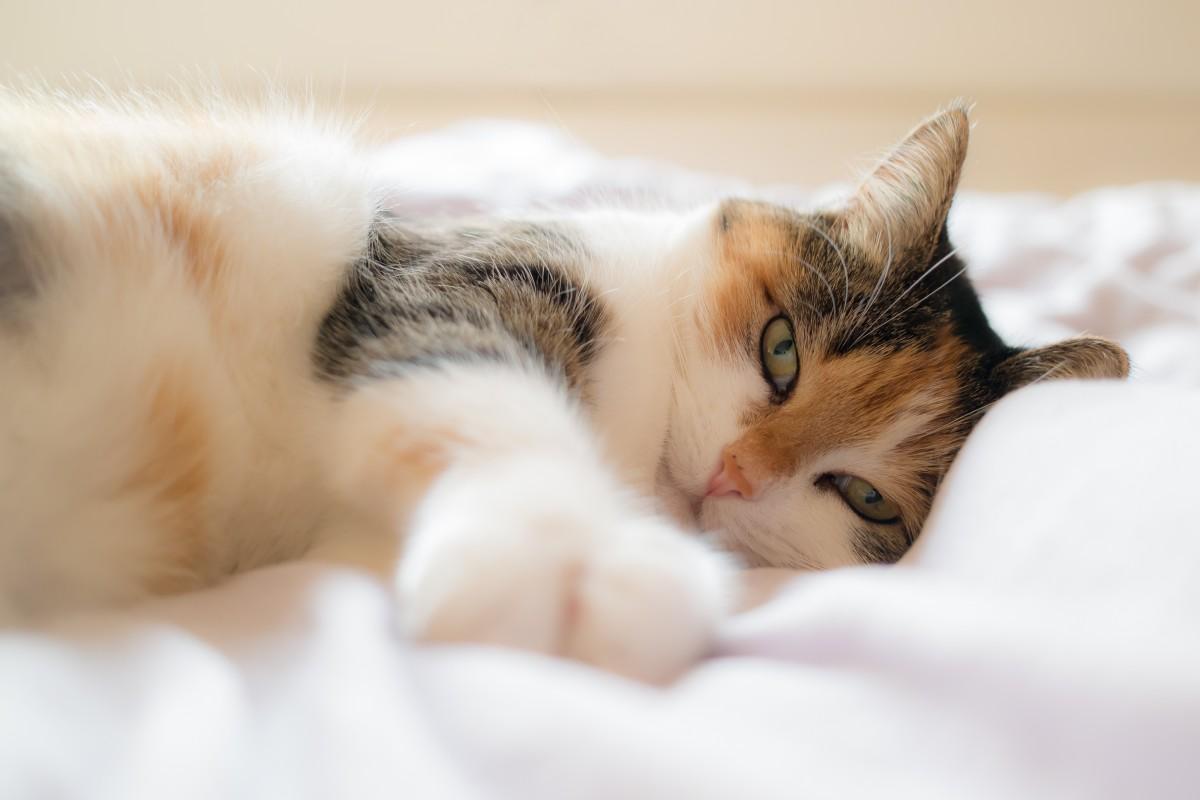 Des chercheurs veulent utiliser CRISPR-Cas9 pour rendre les chats hypoallergéniques