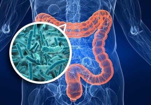 Prendre soin de la santé des intestins – Maéliore ta Santé
